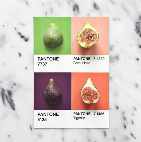 logo-dizajn-pantone2