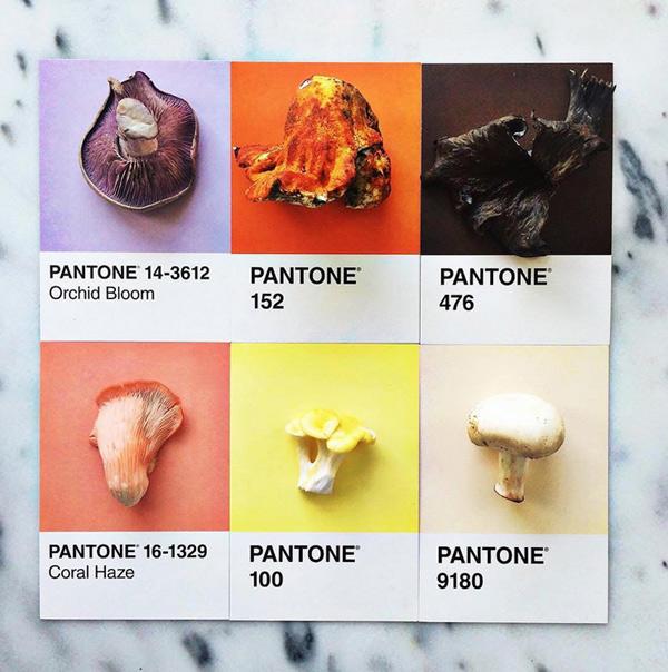 logo-dizajn-pantone4