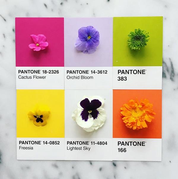 logo-dizajn-pantone5