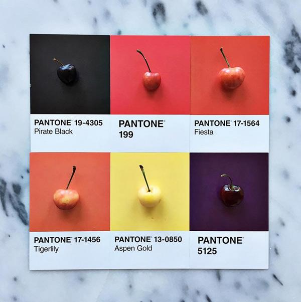logo-dizajn-pantone6