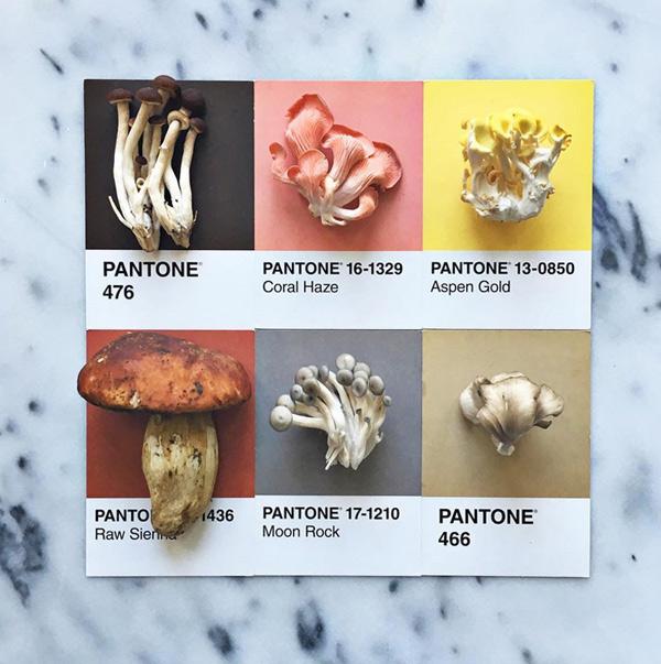 logo-dizajn-pantone7
